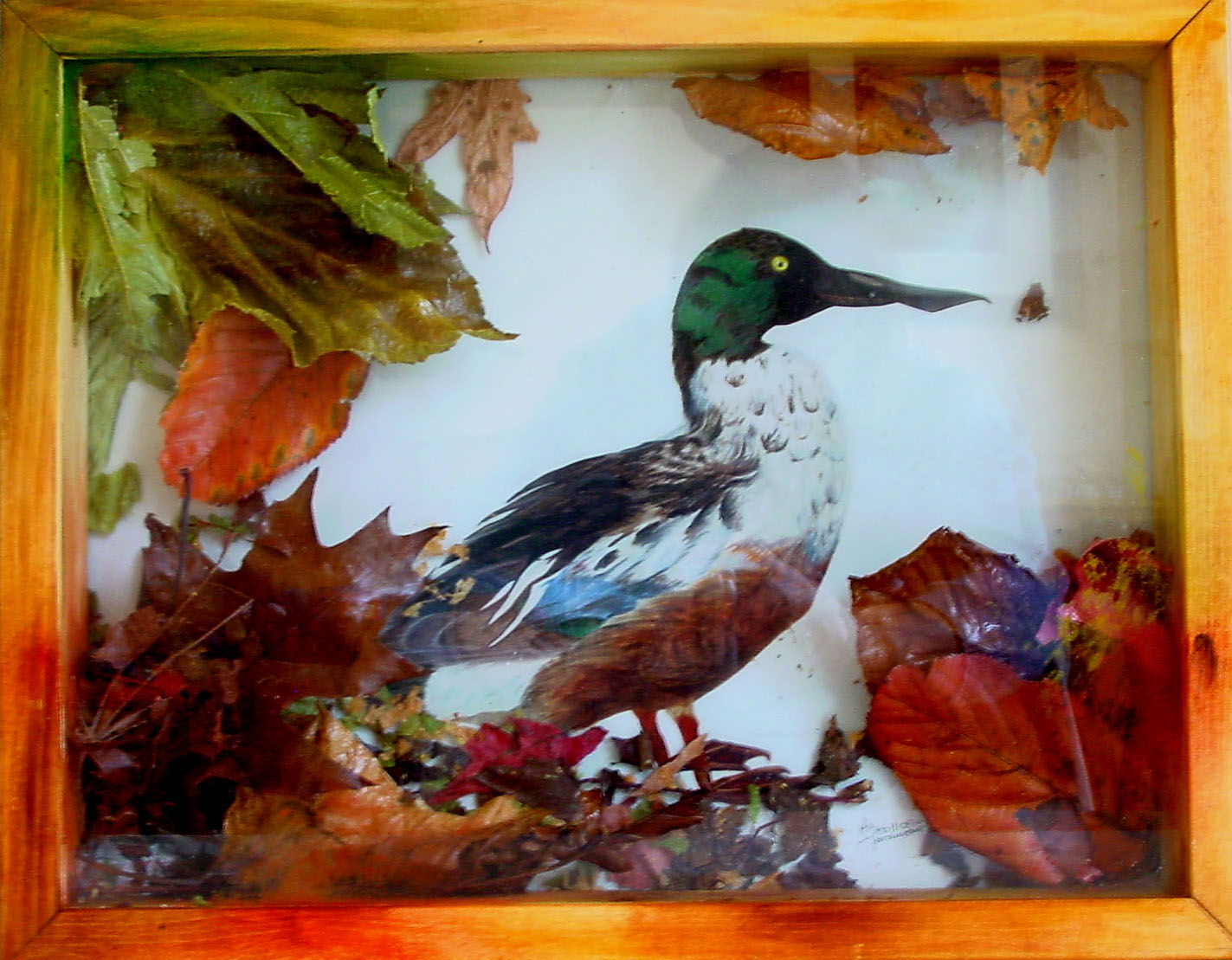 16 - CANARD SAUVAGE - Composition - Mixte - 33 x 45