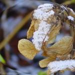 feuille d'abeille