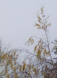 la cime de l'arbre 1