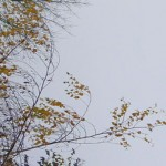 la cime de l'arbre