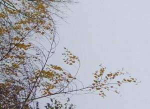 la cime de l'arbre 2