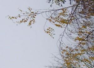la cime de l'arbre 3