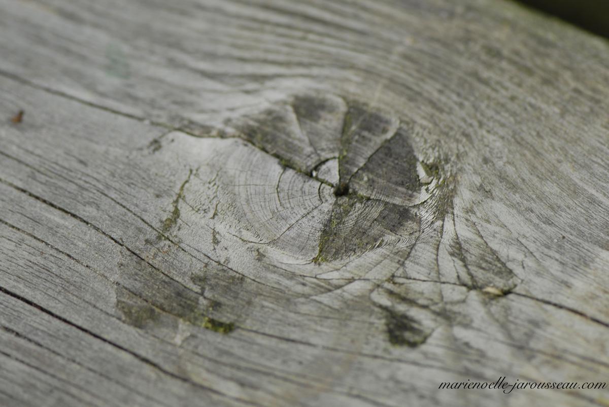Tête de petit oiseau ? Noeud d'une branche ? Nattes de petite fille  ? ... ? ... ?