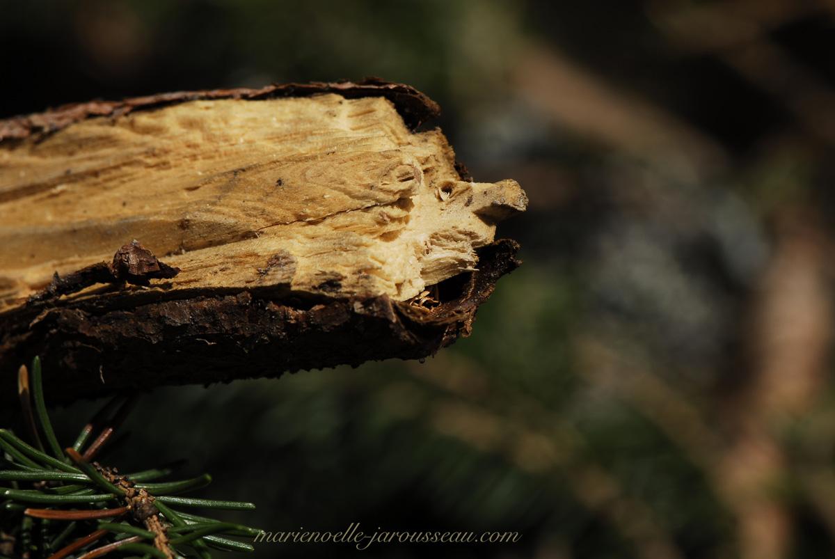 Tête d'animal ? Petite dinosaure ? branche de bois coupée ? .. ? .. ?