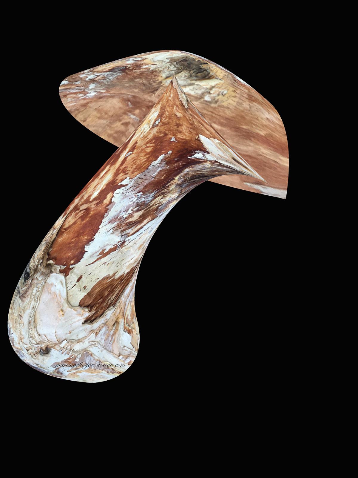 champignon-écorce