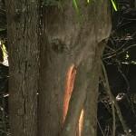 éléphanteau ?..... tronçons d'arbres ? ... ? ...