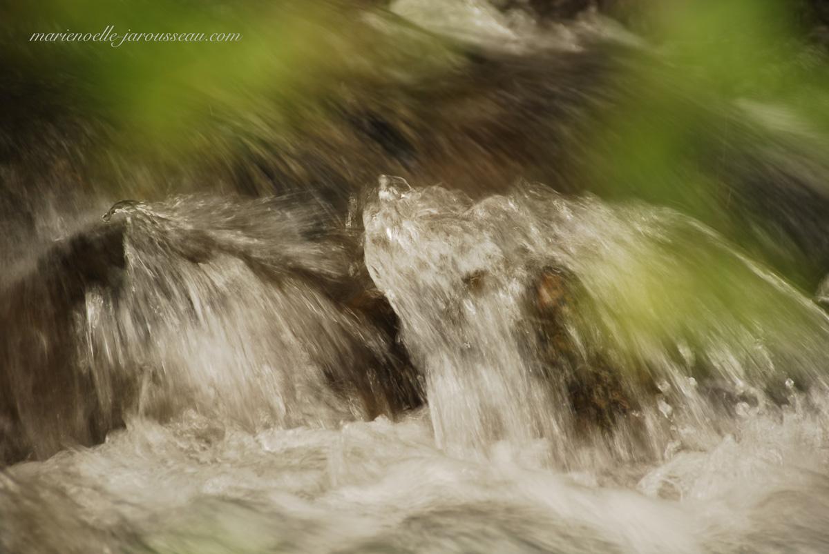 marmotte ? phoque ? cascade de rivière ? ... ? ... ?