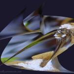 feuille d'abeille mer