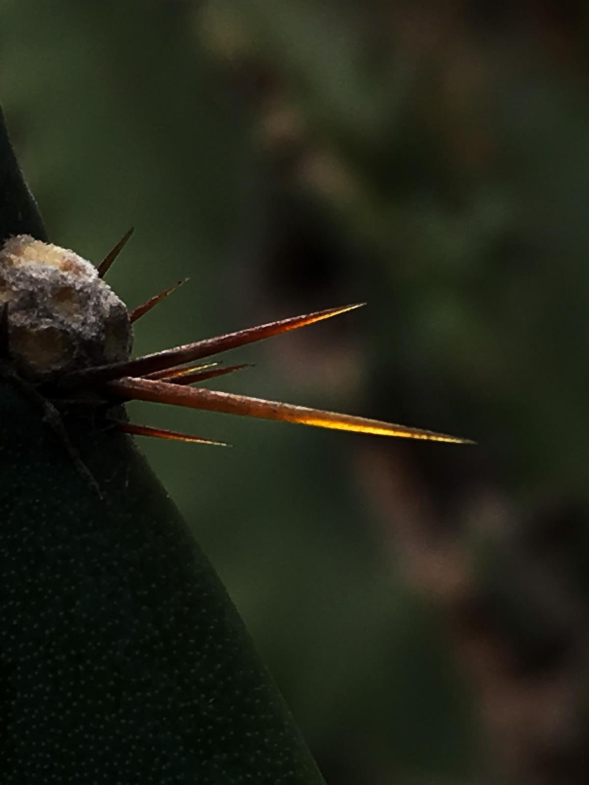 fleur de cactus protection