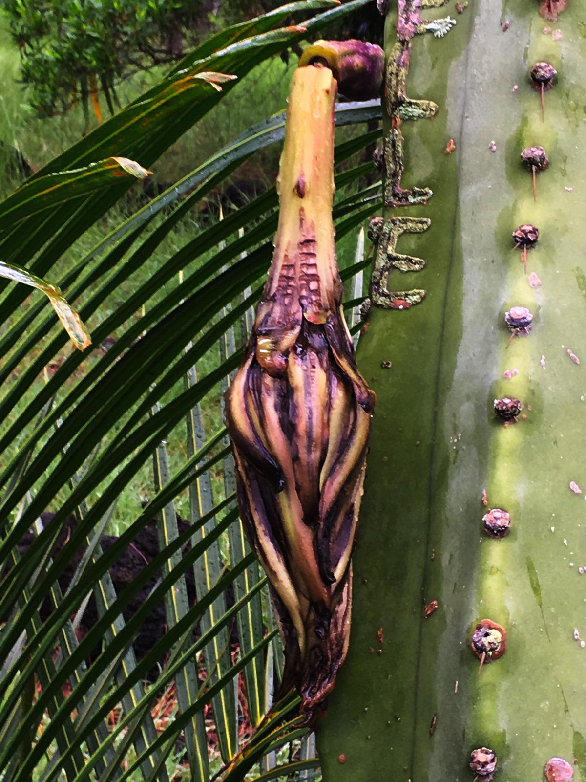 fleur-de-cactus-la-fin1-web-IMG_1071