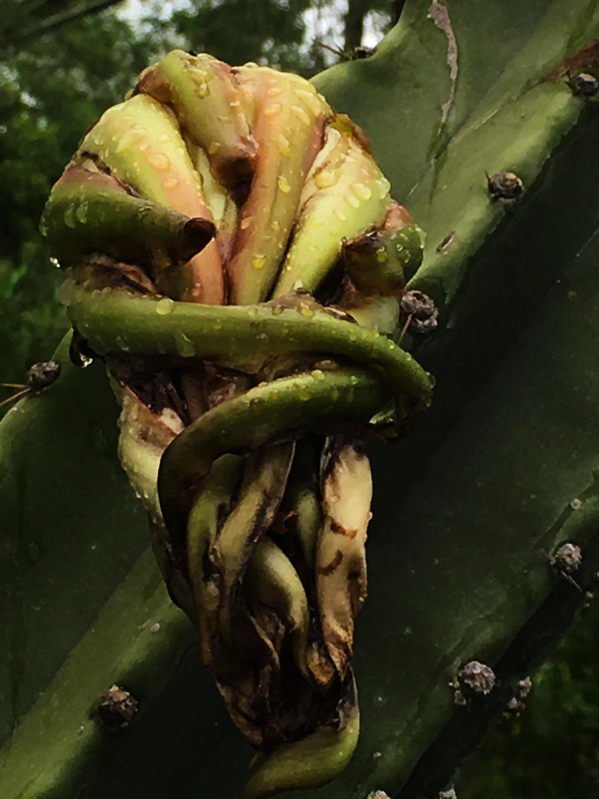 fleur de cactus - la fin