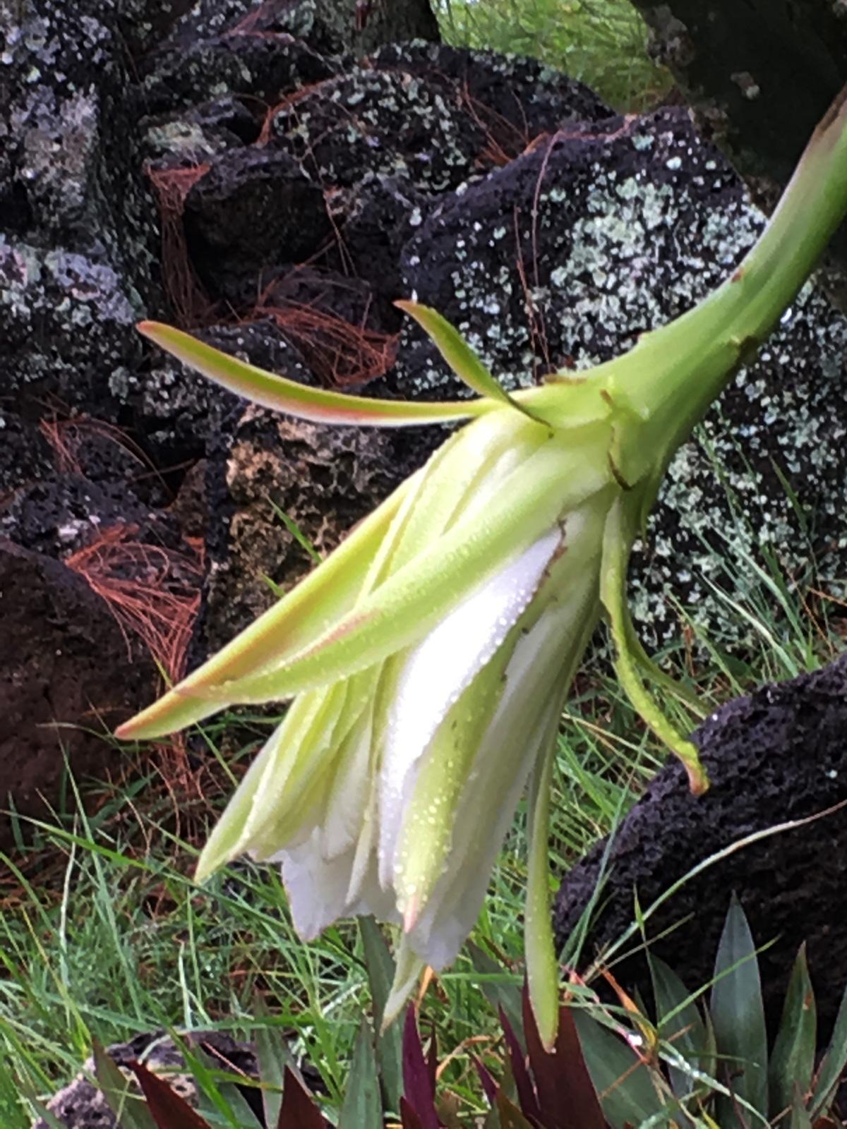 fleur-de-cactus-la-vie1-web-IMG_1075