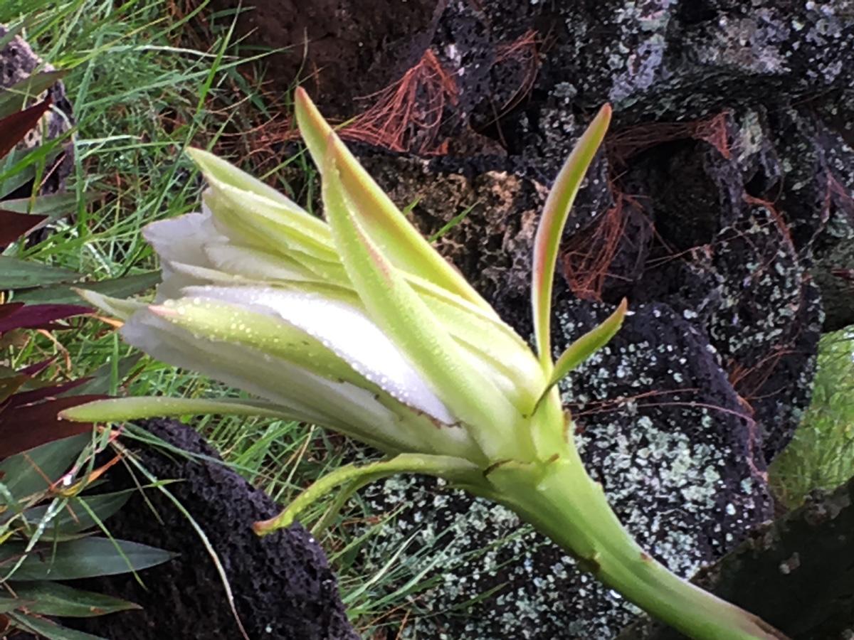 fleur-de-cactus-la-vie1bis-web-IMG_1075