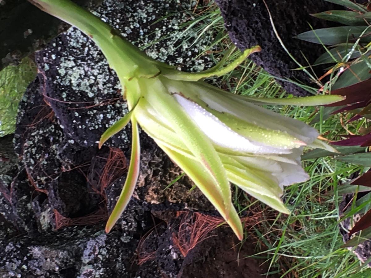 fleur-de-cactus-la-vie1ter-web-IMG_1075