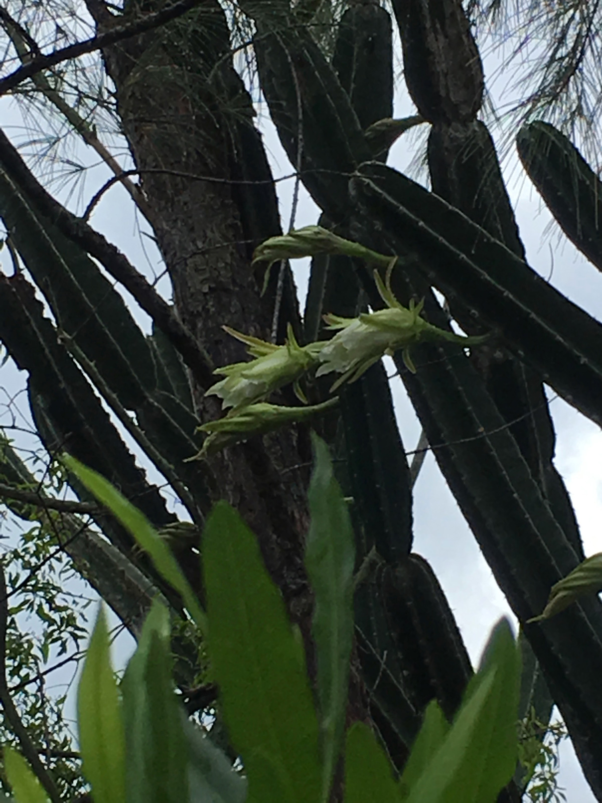 fleur-de-cactus-la-vie7-web-IMG_1079