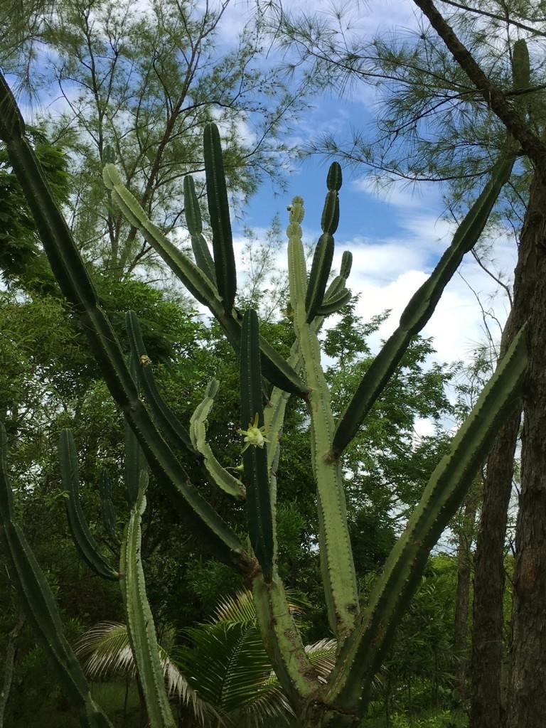 fleur-de-cactus-web-nid1-IMG_1093
