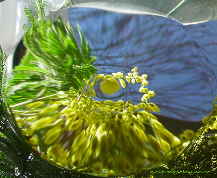 loupe en fleurs